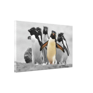 Pinguins de Rockhopper Impressão De Canvas Esticada