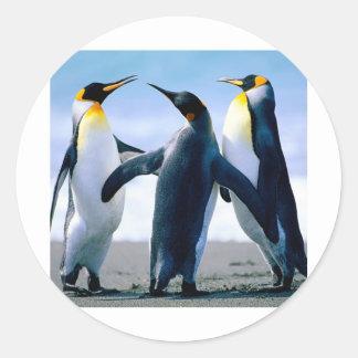 Pinguins Foto Maravilhosa Adesivo