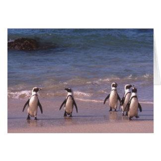 Pinguins no cartão da praia