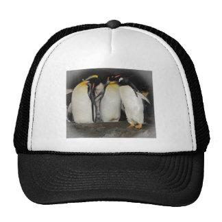 Pinguins no jardim zoológico boné