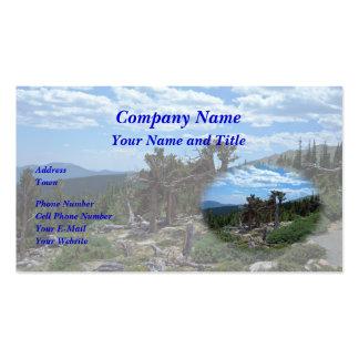 Pinheiro de Bristlecone, montagem Evans, Colorado Modelo Cartões De Visita