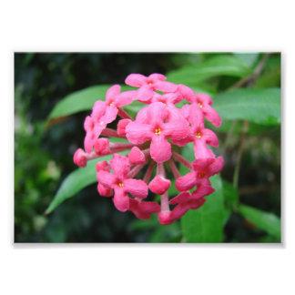 Pinkalicious Impressão De Foto