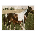 Pinte a égua e o potro cartão postal