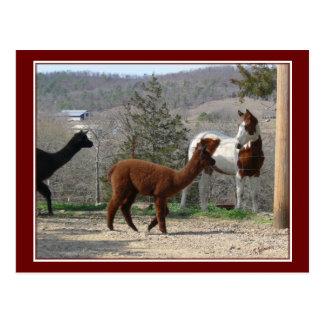 Pinte o cartão da alpaca do cavalo