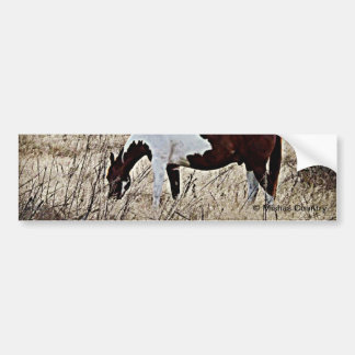 Pinte o cavalo adesivo para carro