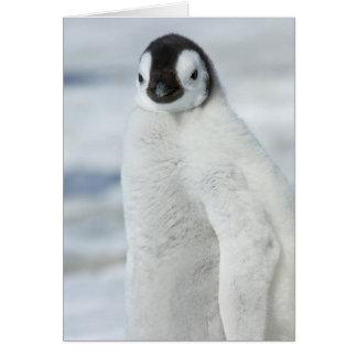 Pintinho do pinguim de imperador - cartão de nota