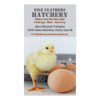 Pintinho na incubação da galinha da caixa do ovo cartão de visita