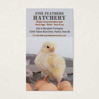 Pintinho na incubação da galinha da caixa do ovo cartão de visitas