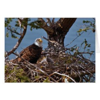 Pintinhos da águia americana - cartão