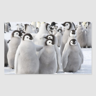 Pintinhos do pinguim de imperador - etiqueta