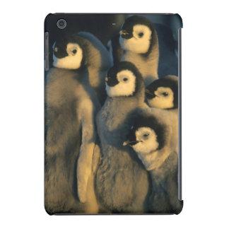 Pintinhos do pinguim de imperador no berçário, capa para iPad mini retina