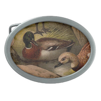 Pintura colorida do vintage dos patos
