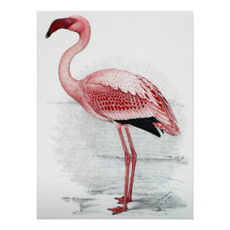Pintura cor-de-rosa do flamingo do vintage pôster