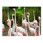 Pintura cor-de-rosa dos flamingos cartão postal