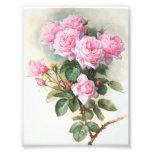 Pintura cor-de-rosa dos rosas do vintage impressão fotográfica