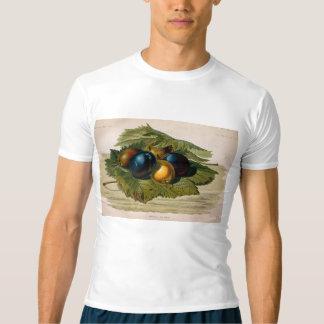 pintura de 5 ameixas do vintage camiseta