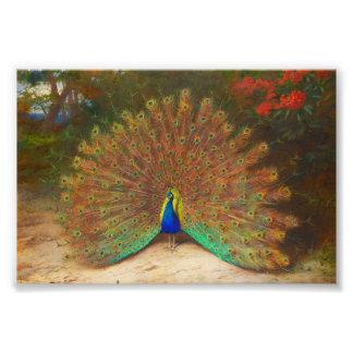 Pintura do pavão do vintage impressão de foto