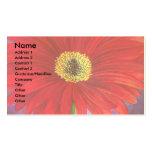 Pintura vermelha da flor da margarida - multi cartão de visita