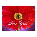 Pintura vermelha da flor da margarida - multi cartao postal