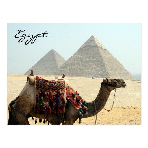 pirâmide de Egipto do camelo Cartao Postal