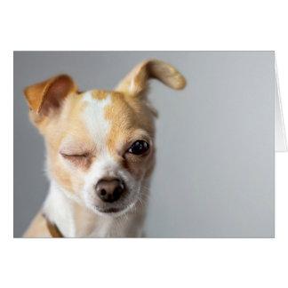 Pisc o cartão da chihuahua