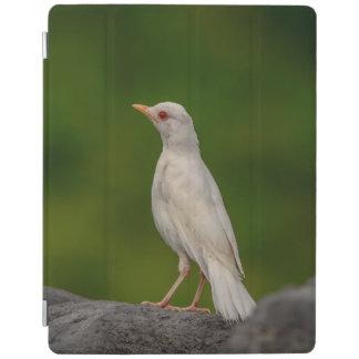 Pisco de peito vermelho do albino no ponto da capa smart para iPad