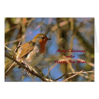 Pisco de peito vermelho no cartão de Natal da