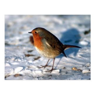 Pisco de peito vermelho vermelho no cartão da neve