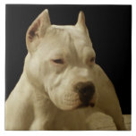 Pitbull branco Terrier Azulejos De Cerâmica