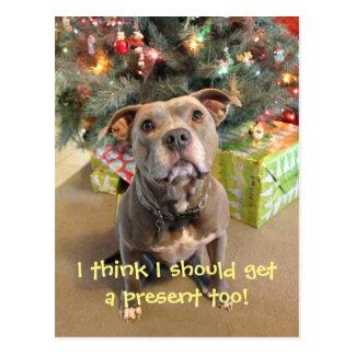 Pitbull eu quero um cartão atual do Natal