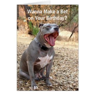Pitbull faz para apostar o cartão de aniversário