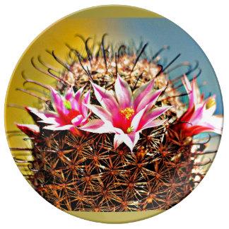 Placa decorativa da porcelana - flor do cacto prato de porcelana