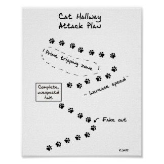 Plano do ataque do corredor do gato pôster