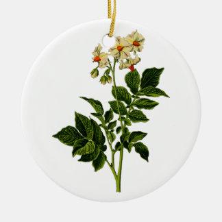 Planta de batata ornamento de cerâmica redondo