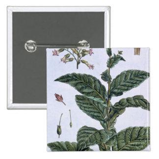 Planta de tabaco, placa 7, 'da coleção Precieuse Bóton Quadrado 5.08cm