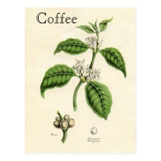 Planta do café do vintage cartão postal