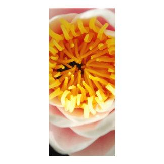 Planta/flor nenufar bonitas 10.16 x 22.86cm panfleto