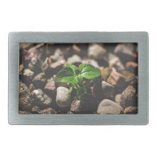 Planta frondosa verde que começa crescer em