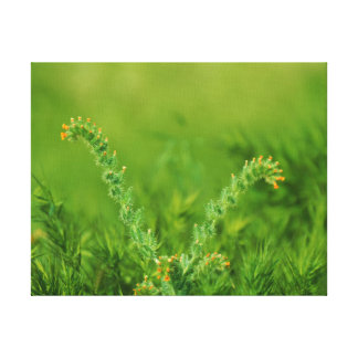 Planta selvagem verde impressão em tela