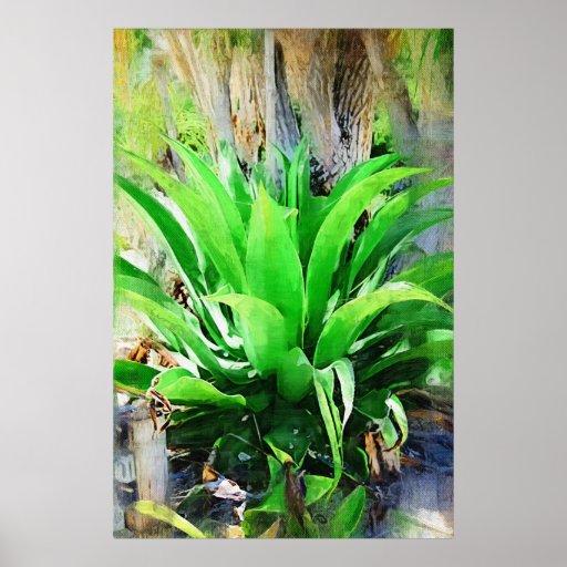 plantas jardim tropical:Tropical Garden Plants