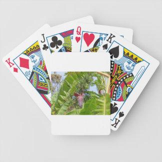 Plantação de banana na ilha macilento de Sok Kwu Baralhos De Poker