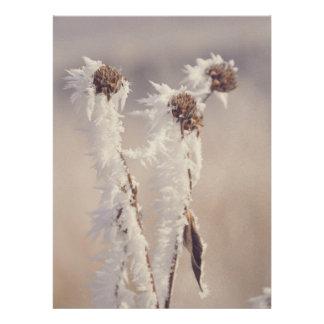 Plantas congeladas convite personalizados