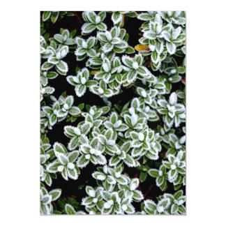 Plantas congeladas do inverno