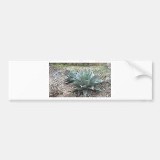 Plantas da agave do deserto adesivo para carro