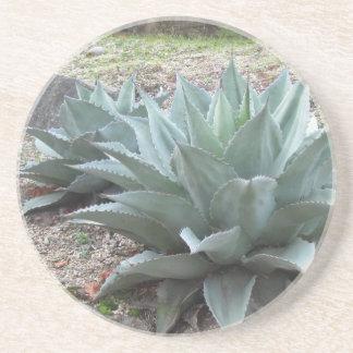 Plantas da agave do deserto porta copos de arenito