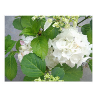 Plantas de jardim brancas da natureza do verde da impressão de foto