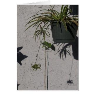 plantas e cartão das sombras da manhã
