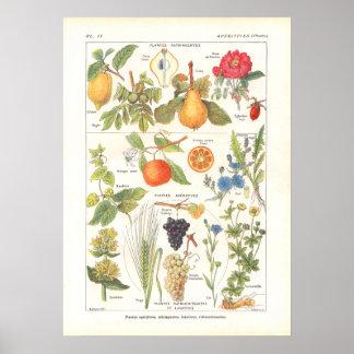 Plantas medicinais que refrescam o impressão em fr