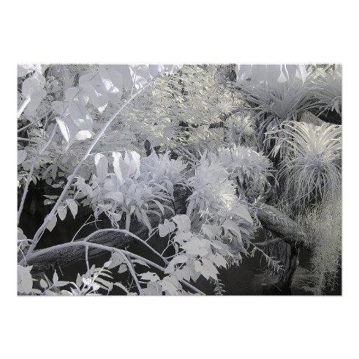 Plantas tropicais/fotografia infravermelha convites personalizados
