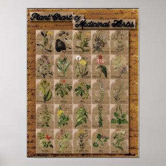 """Plante a carta de ervas medicinais 1 24"""" x 20"""" pôster"""